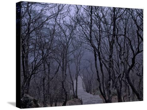 Mountain Forest Path, Mt. Huangshan (Yellow Mountain), China-Keren Su-Stretched Canvas Print