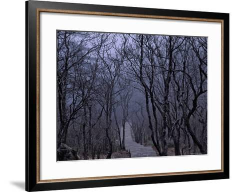 Mountain Forest Path, Mt. Huangshan (Yellow Mountain), China-Keren Su-Framed Art Print