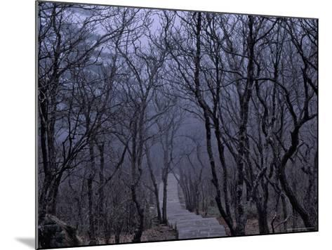 Mountain Forest Path, Mt. Huangshan (Yellow Mountain), China-Keren Su-Mounted Photographic Print
