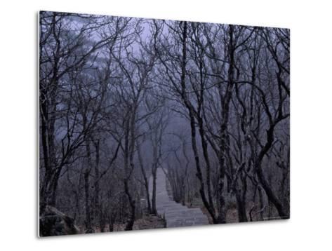Mountain Forest Path, Mt. Huangshan (Yellow Mountain), China-Keren Su-Metal Print