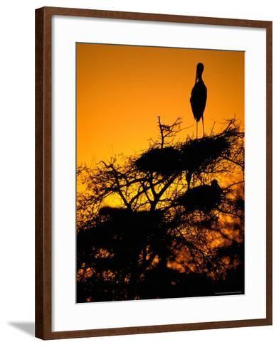 Painted Stork, Bharatpur, Keoladeo National Park, Rajasthan, India-Pete Oxford-Framed Art Print