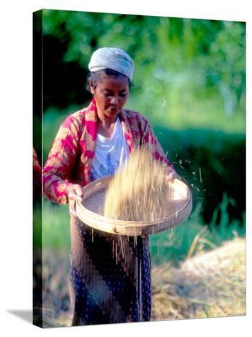 Woman Separates Rice From Hulls, Bali, Indonesia-John & Lisa Merrill-Stretched Canvas Print