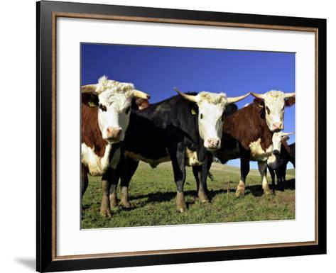 Dairy Cows, New Zealand-David Wall-Framed Art Print