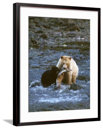 Sow with Cub Eating Fish, Rainforest of British Columbia-Steve Kazlowski-Framed Art Print