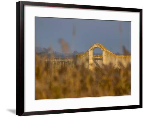 Grasses surrounding Corral Bullring, Camargue, France-Lisa S^ Engelbrecht-Framed Art Print