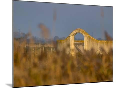 Grasses surrounding Corral Bullring, Camargue, France-Lisa S^ Engelbrecht-Mounted Photographic Print