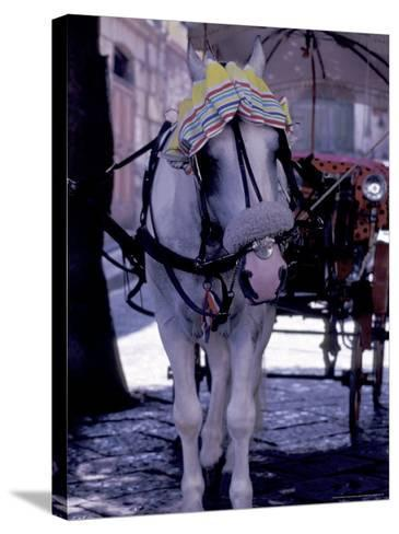 Horse Carriage, Sorrento, Italy-Dave Bartruff-Stretched Canvas Print