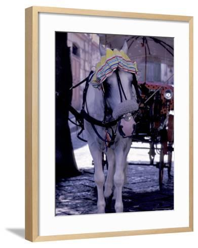 Horse Carriage, Sorrento, Italy-Dave Bartruff-Framed Art Print
