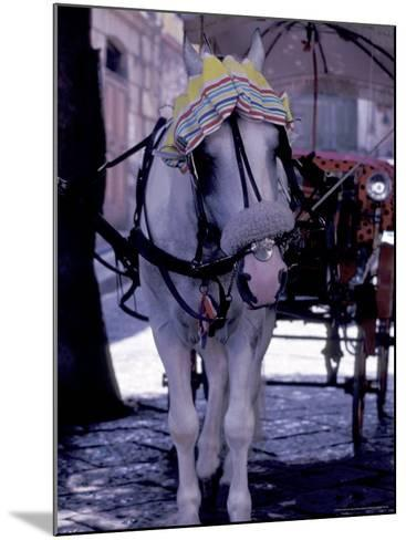 Horse Carriage, Sorrento, Italy-Dave Bartruff-Mounted Photographic Print