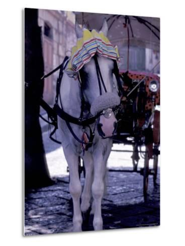 Horse Carriage, Sorrento, Italy-Dave Bartruff-Metal Print