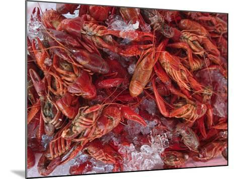Crayfish in Bergen's Fish Market, Norway-Russell Young-Mounted Photographic Print