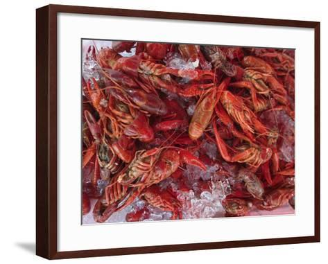 Crayfish in Bergen's Fish Market, Norway-Russell Young-Framed Art Print