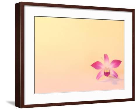 Dendrobium Orchid-Maresa Pryor-Framed Art Print