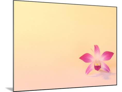 Dendrobium Orchid-Maresa Pryor-Mounted Photographic Print