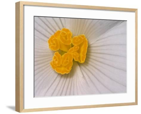 Begonia Flower-Adam Jones-Framed Art Print
