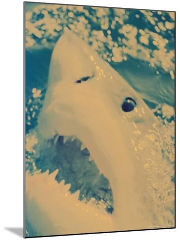 Great White Shark, South Africa-Michele Westmorland-Mounted Photographic Print
