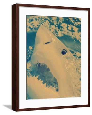 Great White Shark, South Africa-Michele Westmorland-Framed Art Print