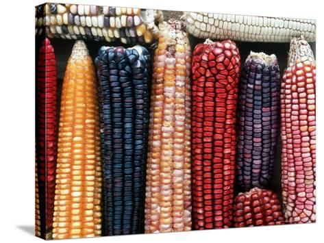 Varieties of Corn that Lacandons Grow in Their Milpas, Selva Lacandona, Naha, Chiapas, Mexico-Russell Gordon-Stretched Canvas Print
