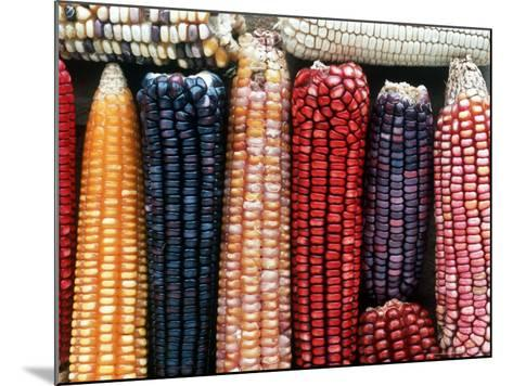 Varieties of Corn that Lacandons Grow in Their Milpas, Selva Lacandona, Naha, Chiapas, Mexico-Russell Gordon-Mounted Photographic Print