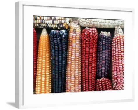 Varieties of Corn that Lacandons Grow in Their Milpas, Selva Lacandona, Naha, Chiapas, Mexico-Russell Gordon-Framed Art Print