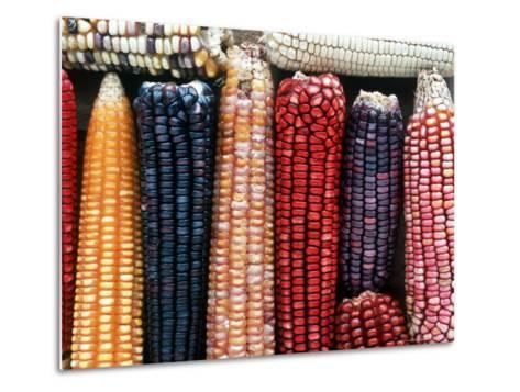 Varieties of Corn that Lacandons Grow in Their Milpas, Selva Lacandona, Naha, Chiapas, Mexico-Russell Gordon-Metal Print