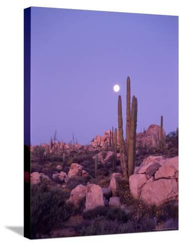 Moonset Desert Scenic and Boojum Cactus, Catavina, Mexico-Stuart Westmoreland-Stretched Canvas Print