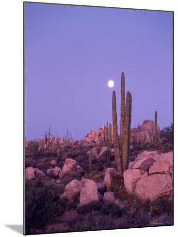 Moonset Desert Scenic and Boojum Cactus, Catavina, Mexico-Stuart Westmoreland-Mounted Photographic Print