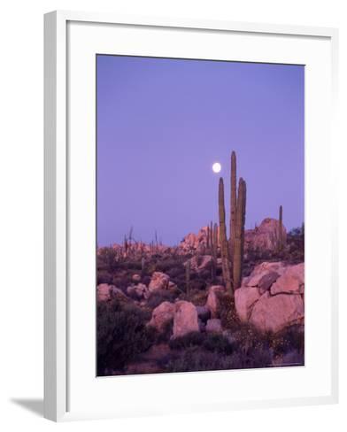 Moonset Desert Scenic and Boojum Cactus, Catavina, Mexico-Stuart Westmoreland-Framed Art Print
