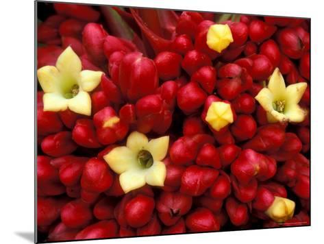 Red and Yellow Rainforest Flower, Barro Colorado Island, Panama-Christian Ziegler-Mounted Photographic Print