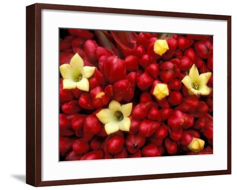 Red and Yellow Rainforest Flower, Barro Colorado Island, Panama-Christian Ziegler-Framed Art Print