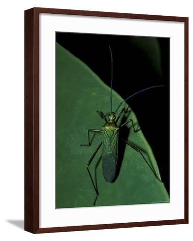 Jungle Bug, Madre de Dios, Peru-Andres Morya-Framed Art Print