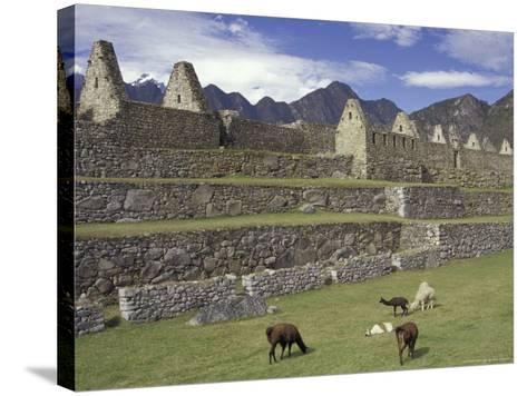 Llama and Ruins, Machu Picchu, Peru-Claudia Adams-Stretched Canvas Print