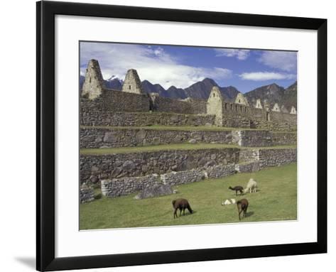 Llama and Ruins, Machu Picchu, Peru-Claudia Adams-Framed Art Print