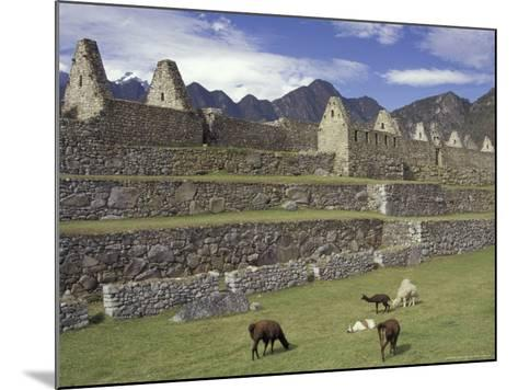 Llama and Ruins, Machu Picchu, Peru-Claudia Adams-Mounted Photographic Print