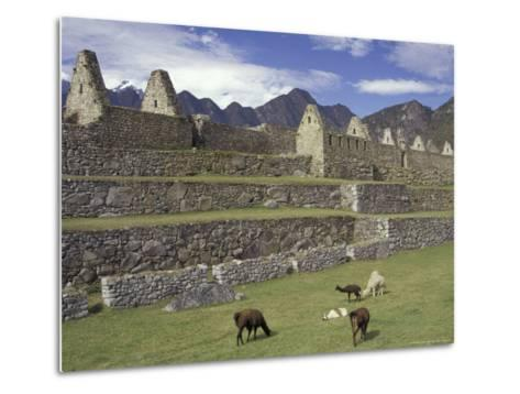 Llama and Ruins, Machu Picchu, Peru-Claudia Adams-Metal Print