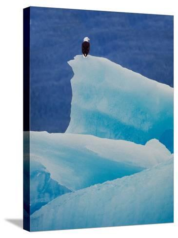 Bald Eagle on an Iceberg in Tracy Arm, Alaska, USA-Charles Sleicher-Stretched Canvas Print