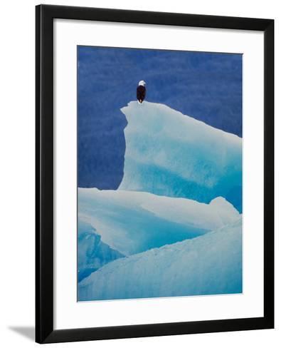 Bald Eagle on an Iceberg in Tracy Arm, Alaska, USA-Charles Sleicher-Framed Art Print