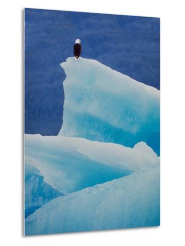 Bald Eagle on an Iceberg in Tracy Arm, Alaska, USA-Charles Sleicher-Metal Print