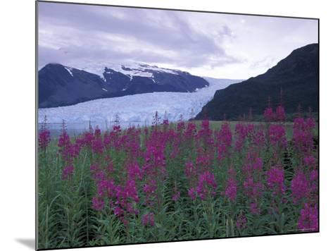 Fireweed in Aialik Glacier, Kenai Fjords National Park, Alaska, USA-Paul Souders-Mounted Photographic Print