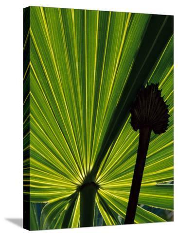 Tropical Foliage of Everglades National Park, Florida, USA-Jerry Ginsberg-Stretched Canvas Print