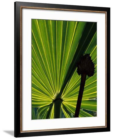 Tropical Foliage of Everglades National Park, Florida, USA-Jerry Ginsberg-Framed Art Print