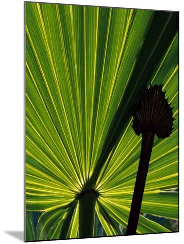 Tropical Foliage of Everglades National Park, Florida, USA-Jerry Ginsberg-Mounted Photographic Print