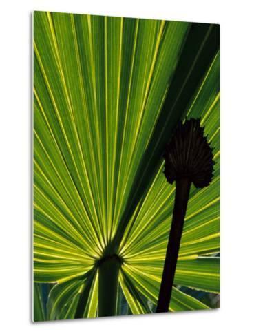 Tropical Foliage of Everglades National Park, Florida, USA-Jerry Ginsberg-Metal Print