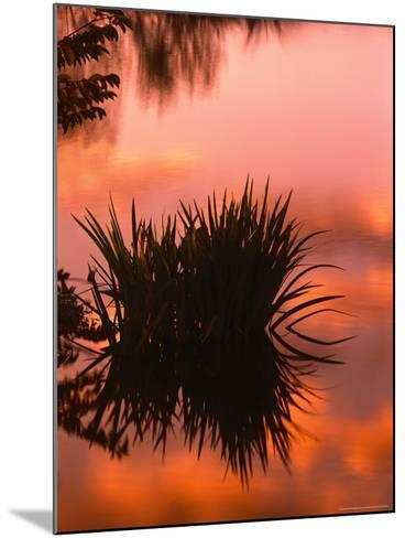 Sunrise Reflection in Swampy Wilderness, Wakodahatchee Preserve, Florida, USA-Jerry Ginsberg-Mounted Photographic Print