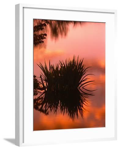 Sunrise Reflection in Swampy Wilderness, Wakodahatchee Preserve, Florida, USA-Jerry Ginsberg-Framed Art Print