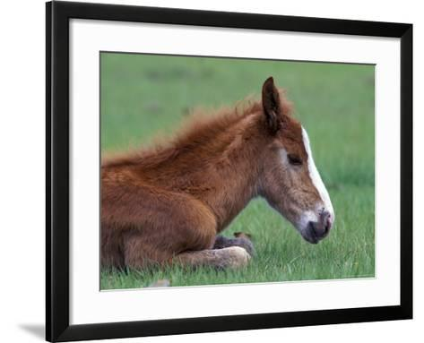 Wild Colt, Cumberland Island, Georgia, USA-Gavriel Jecan-Framed Art Print