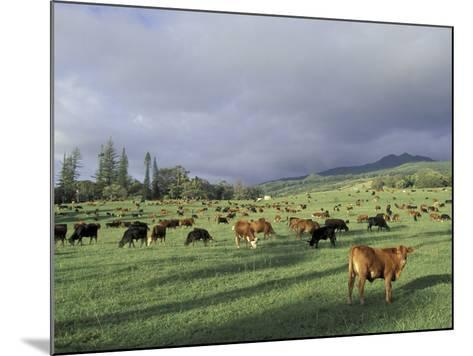 Cows Grazing in Lush Fields, Hana, Maui, Hawaii, USA-John & Lisa Merrill-Mounted Photographic Print