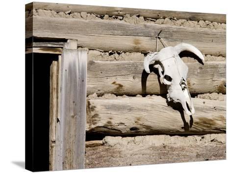 Cattle Skull on Cabin near Salmon, Idaho, USA-Chuck Haney-Stretched Canvas Print