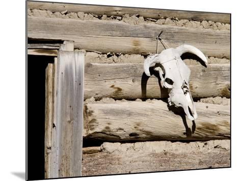 Cattle Skull on Cabin near Salmon, Idaho, USA-Chuck Haney-Mounted Photographic Print