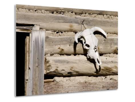 Cattle Skull on Cabin near Salmon, Idaho, USA-Chuck Haney-Metal Print